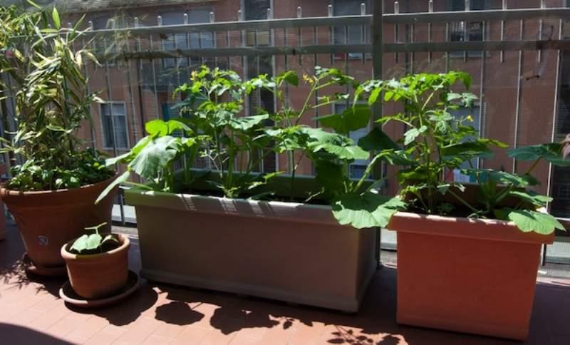 Come fare un Orto in Balcone, Giardino o Terrazzo e risparmiare sull ...